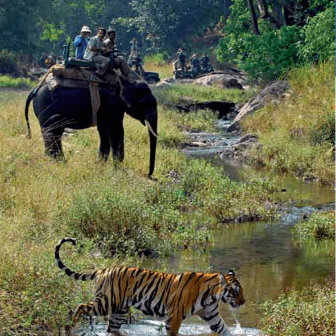 Tours to Bhandhavgarh National Park