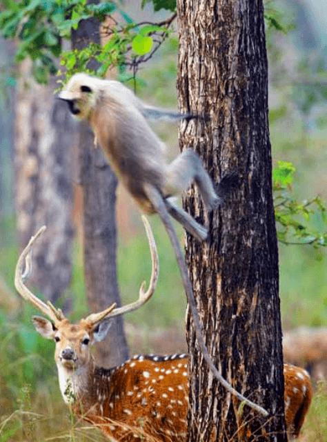 Bhandhavgarh National Park