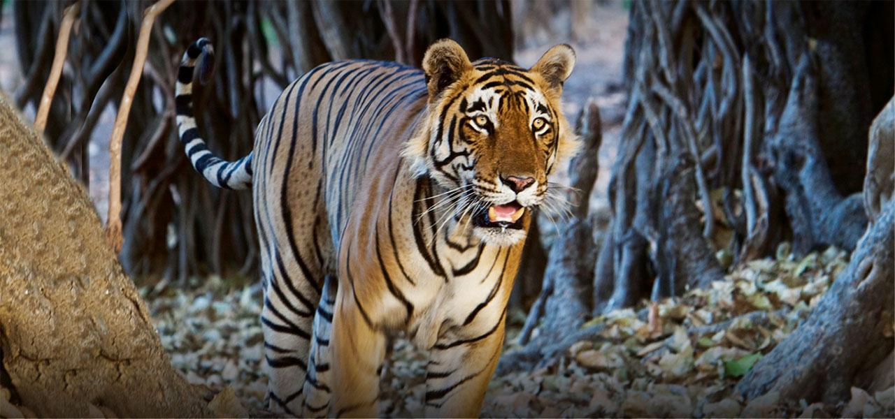 Indian Wildlife Tours, Indian wildlife photography tours