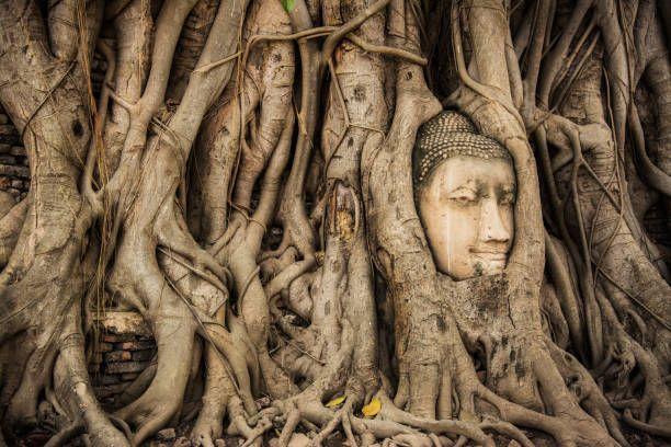 Buddhist Tours - Bodhi Tree